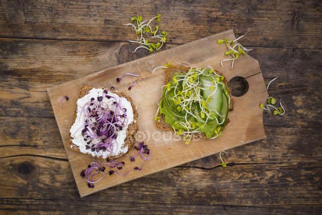 Плавлений сир і авокадо сендвіч — стокове фото