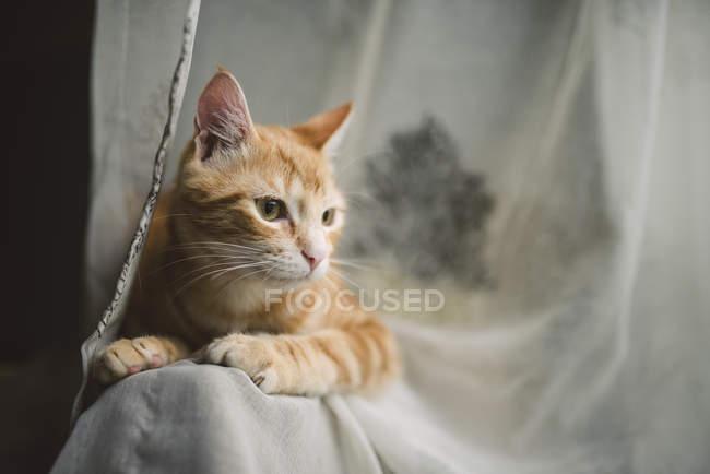 Tabby Katze auf Rückenlehne — Stockfoto