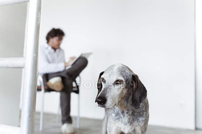 Dog and architect sketching in notebook — Stock Photo
