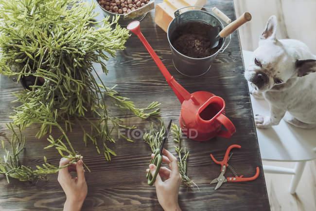 Mulher cuidando da planta — Fotografia de Stock