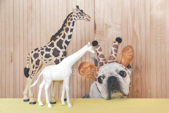 French bulldog wearing giraffe headband — Stock Photo