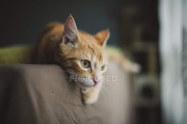 Gato de gengibre descansando — Fotografia de Stock