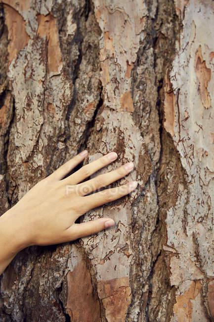Main féminine touchant l'écorce — Photo de stock