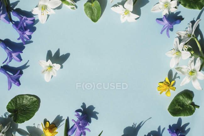 Diferentes flores en la superficie azul - foto de stock