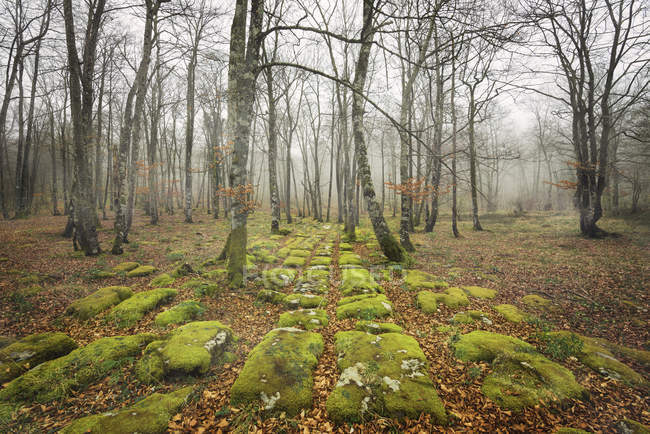 Moss-grown rock pathway in autumn forest, Spain, Burgos — Stock Photo