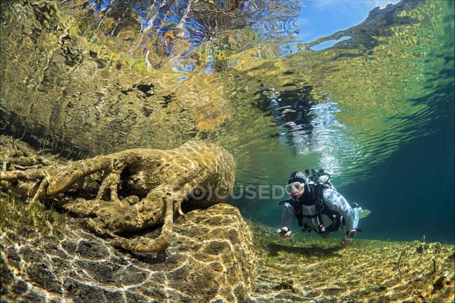 Österreich, Tirol, See Fernsteinsee Baum unter Wasser mit einem Taucher — Stockfoto