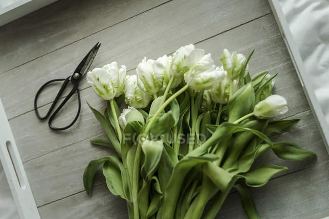 White tulips and scissors — Stock Photo