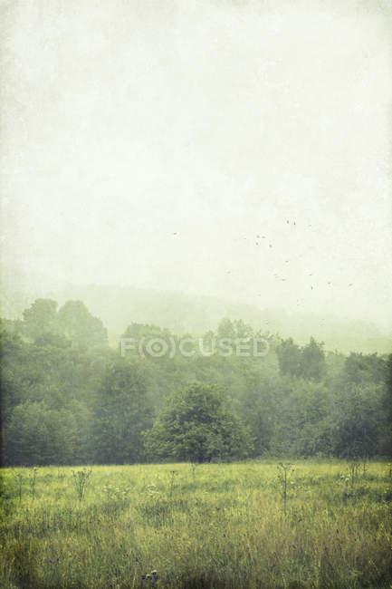 Champ et arbres le matin — Photo de stock