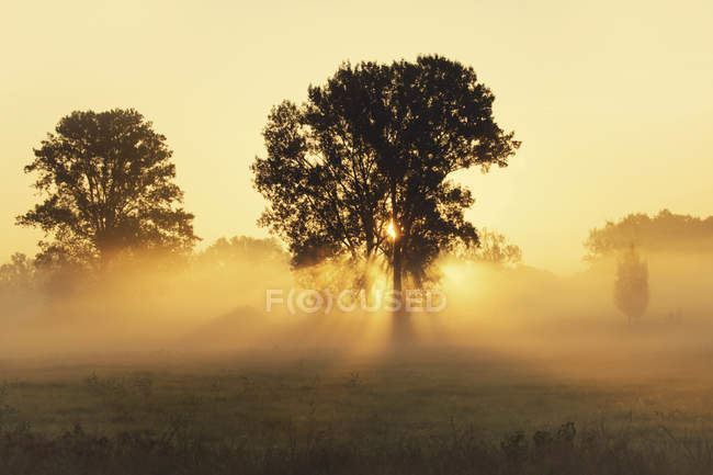 Trees on meadow with early morning haze — Stock Photo