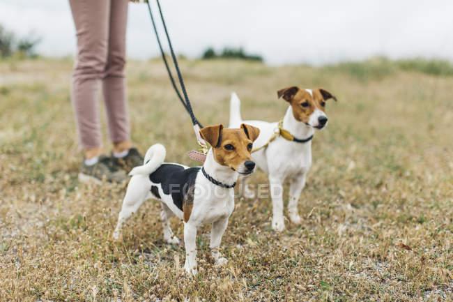 Femme debout avec deux chiens — Photo de stock