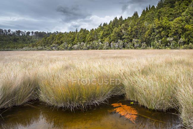 Lagunenlandschaft von Okarito — Stockfoto