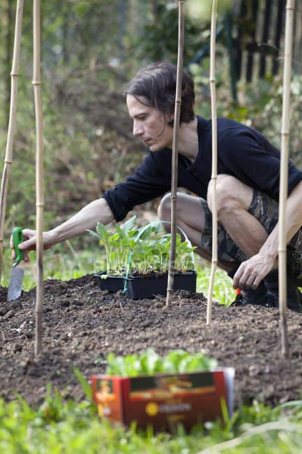 Man gardening in allotment — Stock Photo