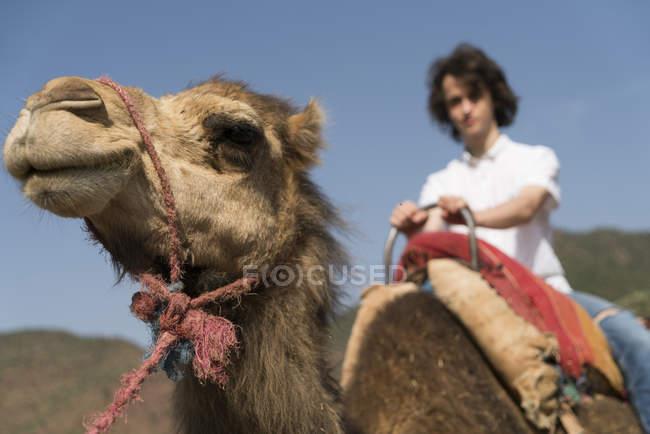 Morocco, man riding on a camel — Stock Photo