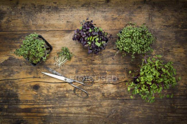 Organic cress and scissors — Stock Photo