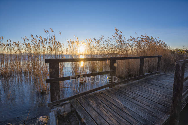 Bridge and reed at sunset — Stock Photo