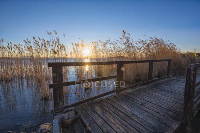 Ponte e reed al tramonto — Foto stock