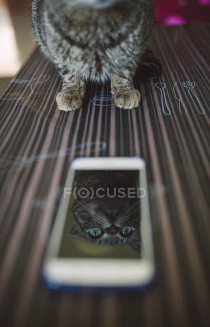 Mirror image of cat on display — Stock Photo