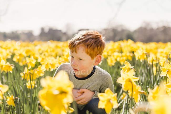 Redheaded boy in daffodil field — Stock Photo