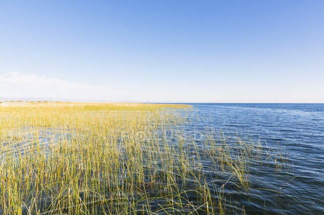 View of water and tall grass on shore during daytime, peru — Stock Photo