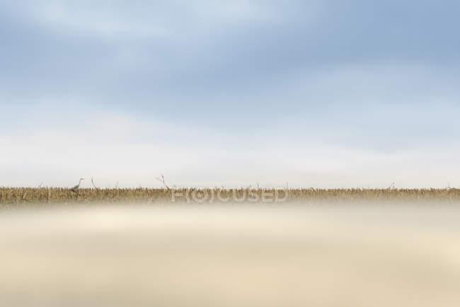 Кран на поле во время дневных, поверхности уровня — стоковое фото