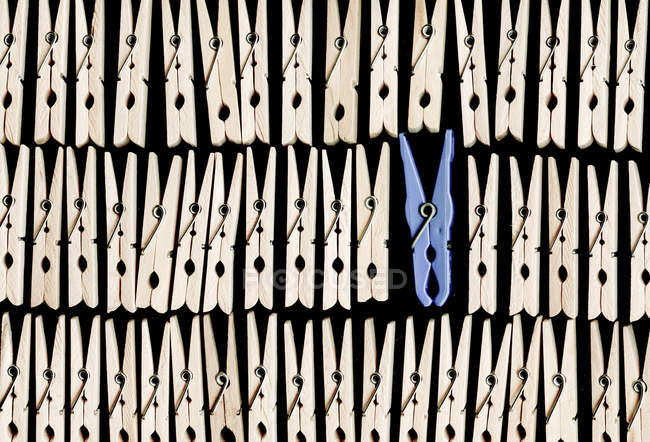 Blue clothes peg between wooden clothes pegs — Stock Photo