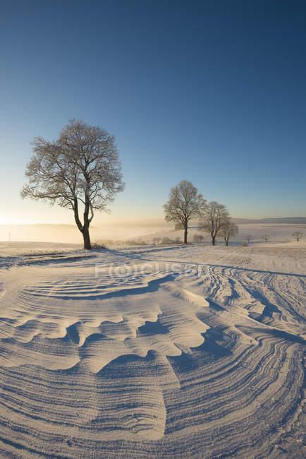 Германия, Гельзенберг, район Констанции, зимний пейзаж с сугробами — стоковое фото