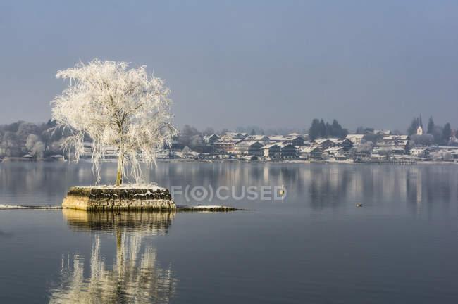 Одно дерево над водой в дневное время — стоковое фото