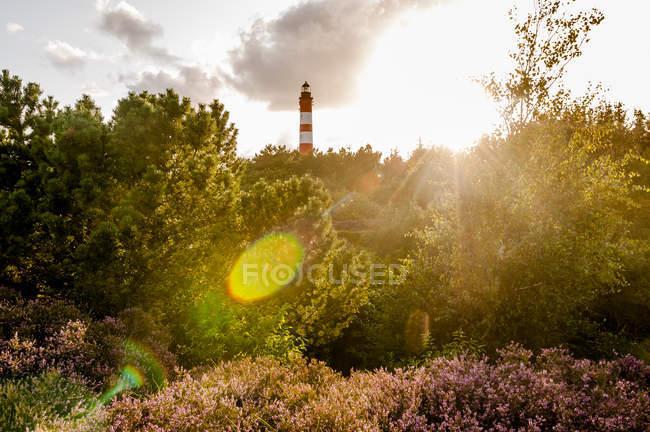 Deutschland, Schleswig-Holstein, Nordsee, Amrum, Leuchtturm im Hintergrund — Stockfoto