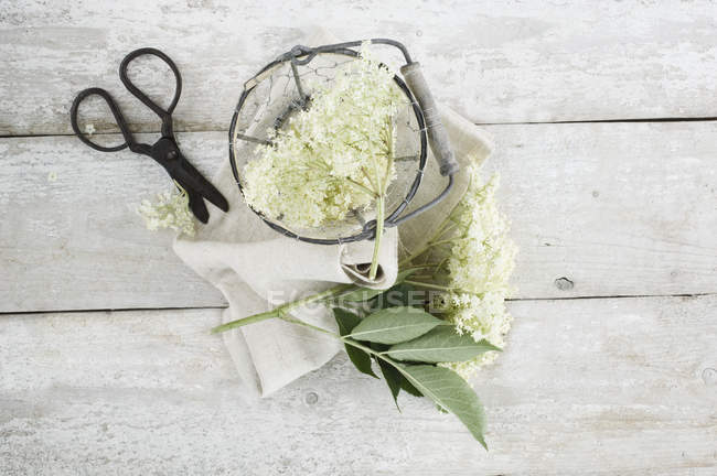 Ederflowers in wire basket, cloth and scissors on wood — Stock Photo