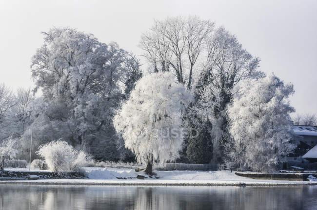 Vista di alberi con neve contro l'acqua del lago durante il giorno — Foto stock