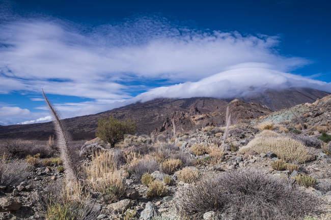 Вид из засушенных растений на поле, Канарские острова — стоковое фото