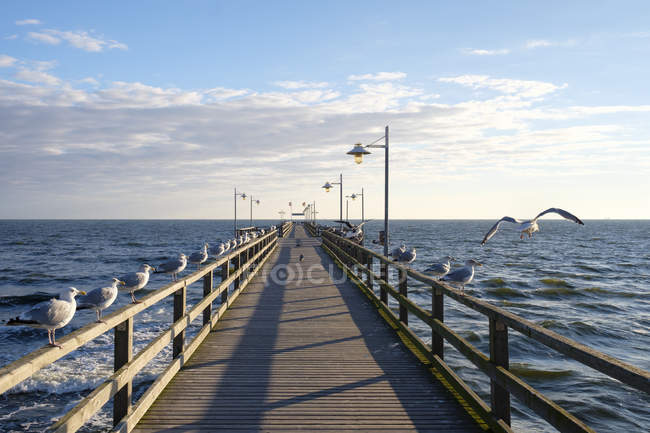 Germany, Usedom, Bansin, seagulls at pier over water — Stock Photo