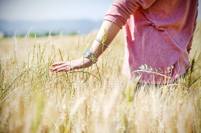 Weibliche Hand berührt Ähren, die auf Feld wachsen — Stockfoto
