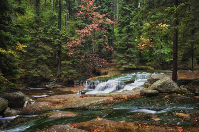 Европа, Польша, Судетах, Szklarka потока в осенние пейзажи горных лесов — стоковое фото