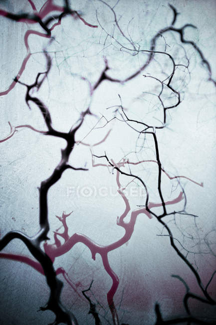 Surreal tree Twigs on white background — Stock Photo