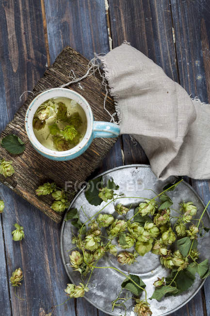 Hopfen tea in  mug — Stock Photo
