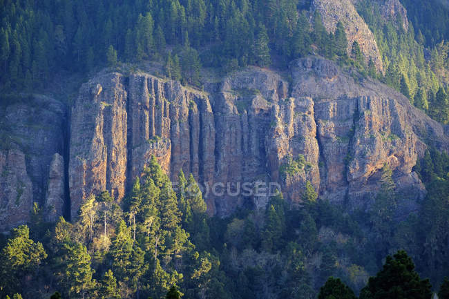 Rock formations with trees  during daytime — Stock Photo