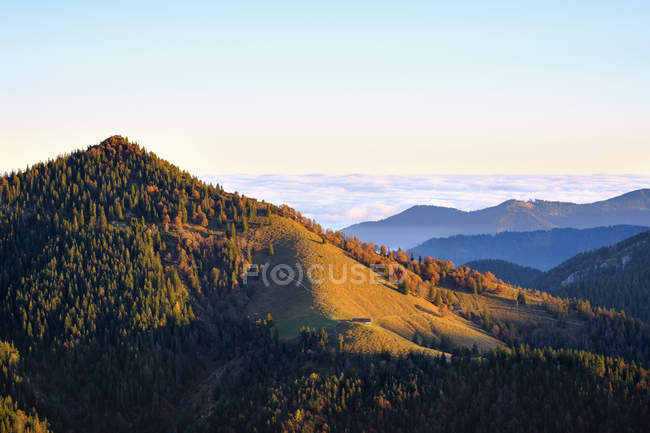 Vue de la colline avec des arbres pendant la journée, Hirschhoernlkopf, Alpes, Hirschhoernlkopf — Photo de stock
