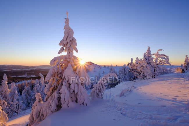 Veduta degli alberi sulla neve durante il giorno — Foto stock