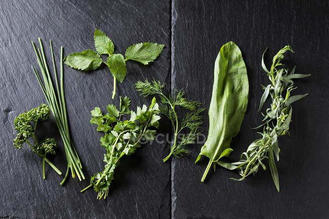 Close-up de ervas verdes frescas na ardósia — Fotografia de Stock