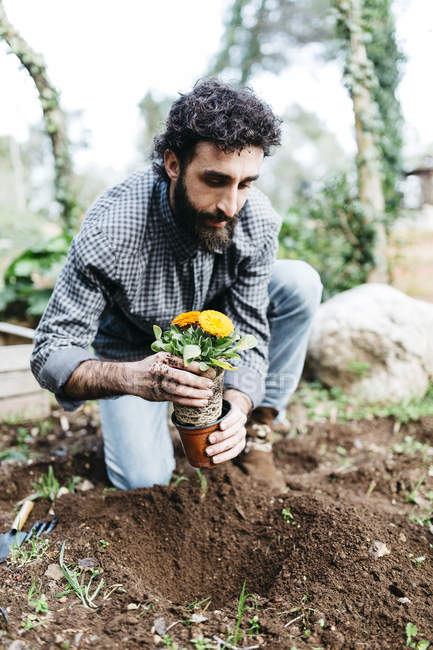Man planting flowers — Stock Photo