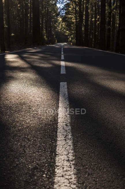 Пустая дорога через лес под солнечным светом — стоковое фото