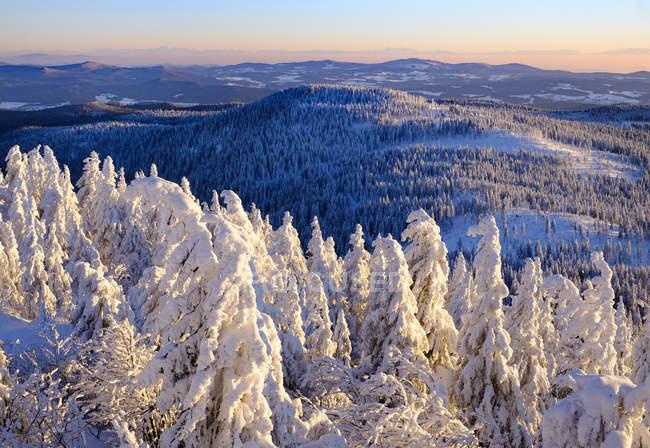 Німеччина, Баварія, Баварський ліс взимку — стокове фото