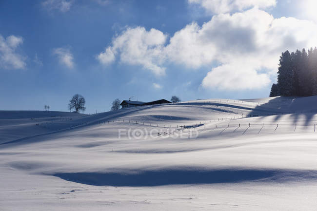 View of snow field with trees under clouds during daytime — Stock Photo