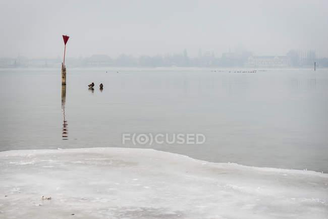 Зимний пейзаж с уток на замерзшем озере в летнее угрюмый — стоковое фото