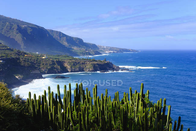 View of rocks on shore and plants ob foreground over water  during daytime — Stock Photo