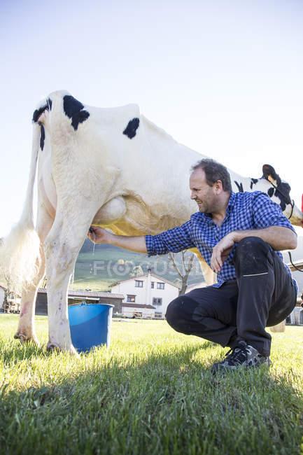 Кавказький фермер доїння корови на пасовищі — стокове фото