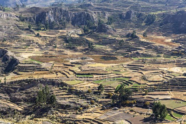 Pérou, Andes, Chivay, Colca Tal, vue magnifique Canyon de Colca par dessus — Photo de stock