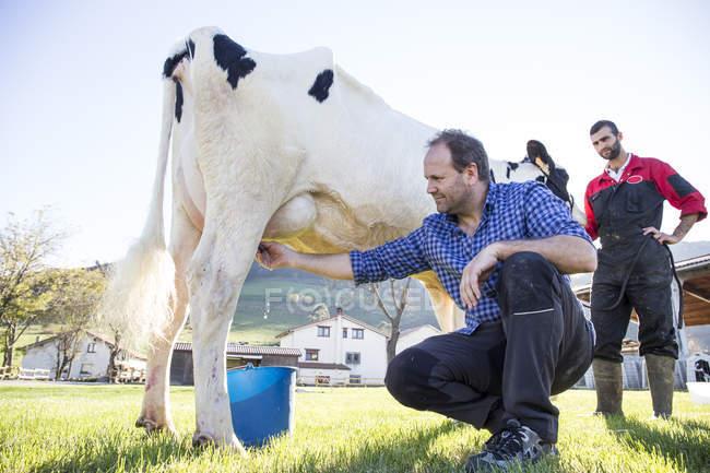 Дорослий фермер доїння корови на пасовищі — стокове фото
