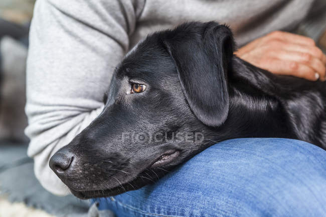 Cropped portrait of man with black dog on lap — Stock Photo